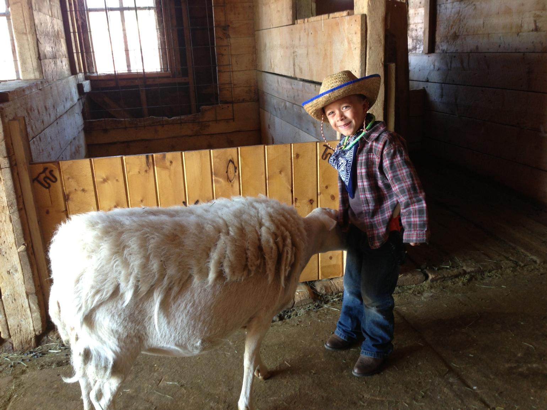 Josh Big Sheep