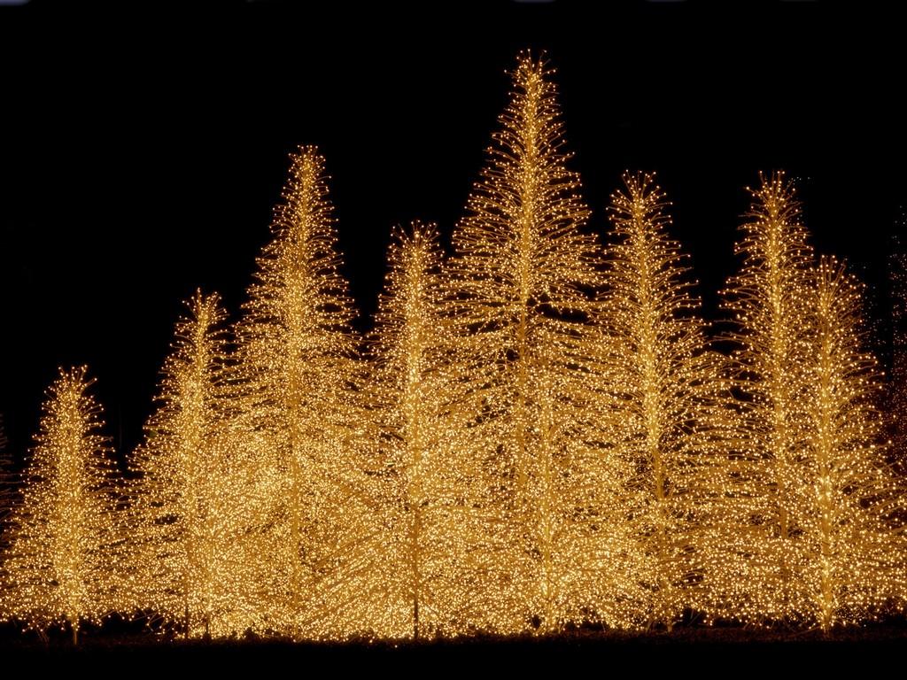 Led-Christmas-Lights-455