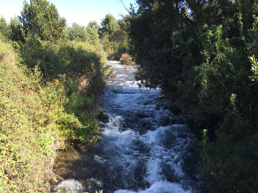 The headwaters of the Jordan flowing around the ancient city of Dan.